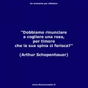 "Dobbiamo rinunciare a cogliere una rosa, per timore che la sua spina ci ferisca? (Arthur Schopenhauer) • <a style=""font-size:0.8em;"" href=""http://www.flickr.com/photos/158938934@N02/37472638360/"" target=""_blank"">View on Flickr</a>"