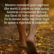 """""""Dice il saggio: Mentre cammini può capitare che metti il piede su una spina. Sentirai certamente dolore, ma farai di tutto per toglierla. Fa lo stesso nella tua vita: togli le spine e riprendi il cammino."""""""