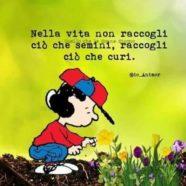 """""""Nella vita non raccogli ciò che semini, raccogli ciò che curi."""" (Io_animor)"""